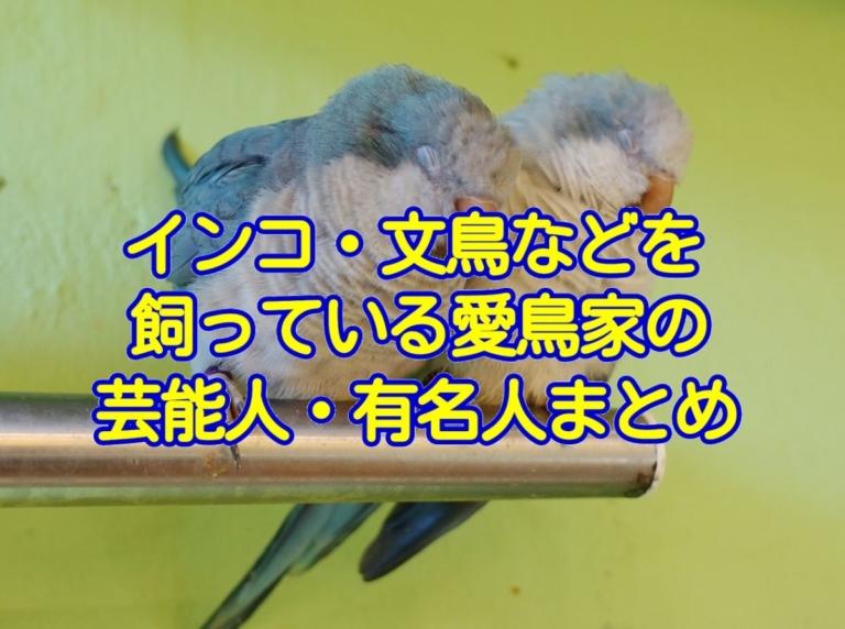 インコ・文鳥などを飼っている愛鳥家の芸能人・有名人まとめ(2019年9月更新)