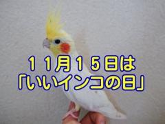 11月15日は「いいインコの日」