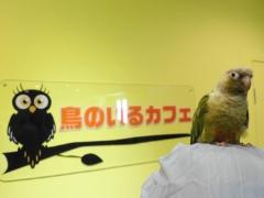 ウロコインコと写っている鳥のいるカフェ浅草店の看板