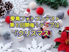 愛鳥フォトコンテスト第6回「クリスマス」