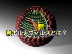 鳥ボルナウィルスとは?インコなどの愛鳥に様々な病気をもたらす恐ろしいウイルス