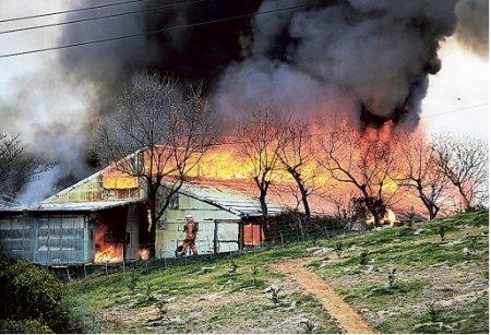 静岡県浜松市で火事が発生し4000羽ものインコが犠牲に