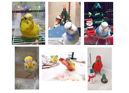 第6回愛鳥フォトコンテスト「クリスマス」の賞品が到着