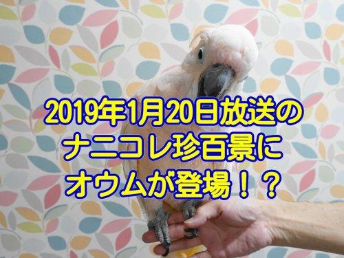 2019年1月20日放送のナニコレ珍百景にオウムが登場!?