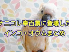 テレビ朝日系列のナニコレ亭百景に登場したインコ・オウムの出演情報まとめ