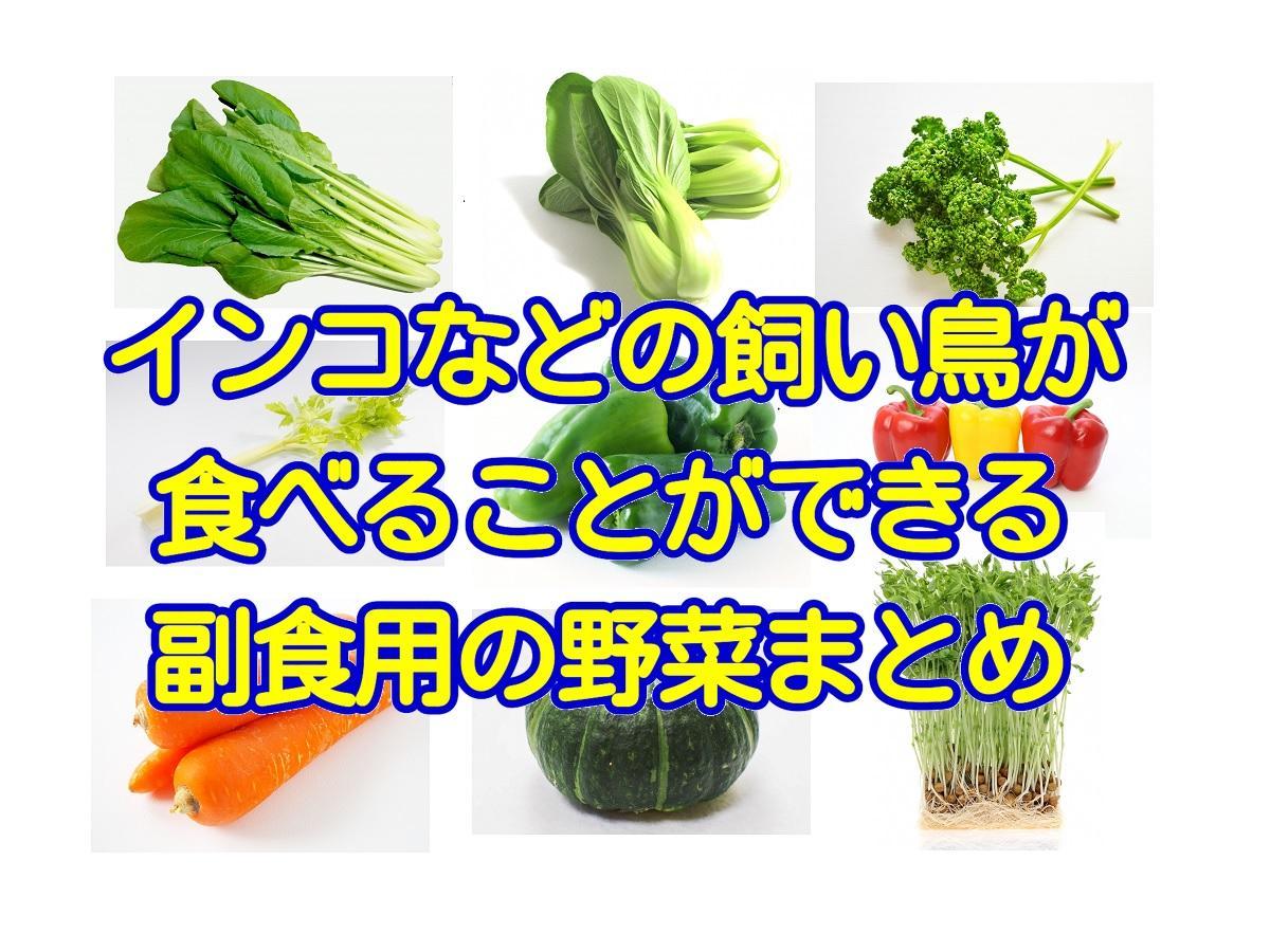 インコなどの飼い鳥が食べることができる副食で与えてOKな野菜まとめとオススメ野菜3選