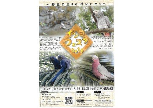 インコフェスタ2019が3月9日に新宿で開催!インコの野生下の生態を紹介