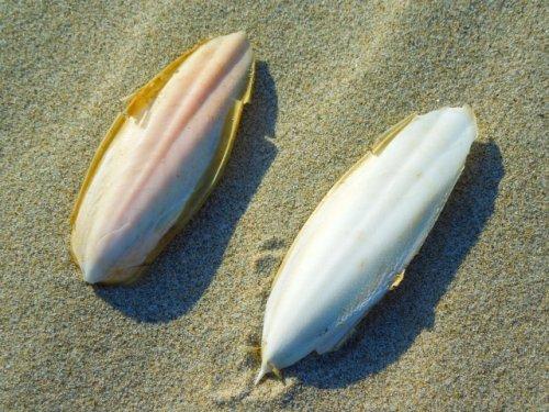 インコの副食カトルボーン(イカの甲)の与え方と注意点まとめ
