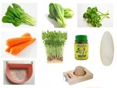 インコの副食まとめ~シード食の愛鳥に与えるべき食べ物と与えてはいけないもの