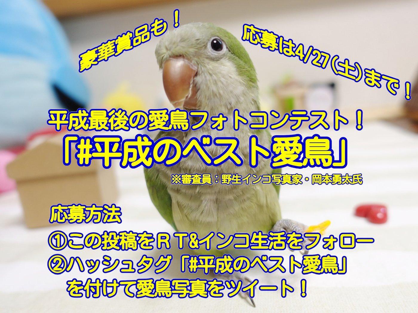 平成最後の愛鳥フォトコンテスト「#平成のベスト愛鳥」をツイッターとインスタグラムで開催