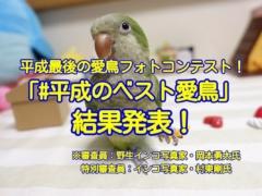平成最後の愛鳥フォトコンテスト「#平成のベスト愛鳥」結果発表