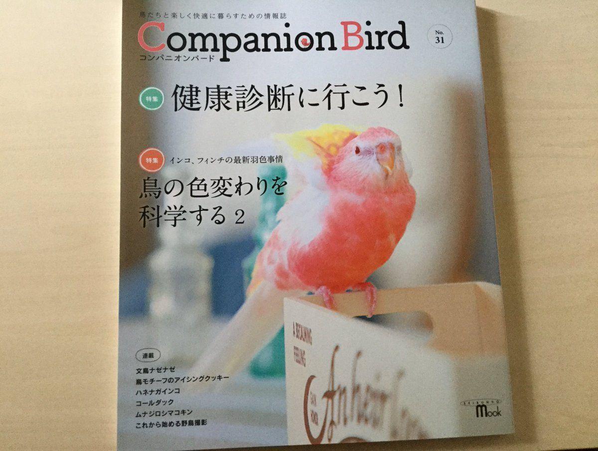 誠文堂新光社のコンパニオンバードNo31号の表紙(2019年6月13日発売)