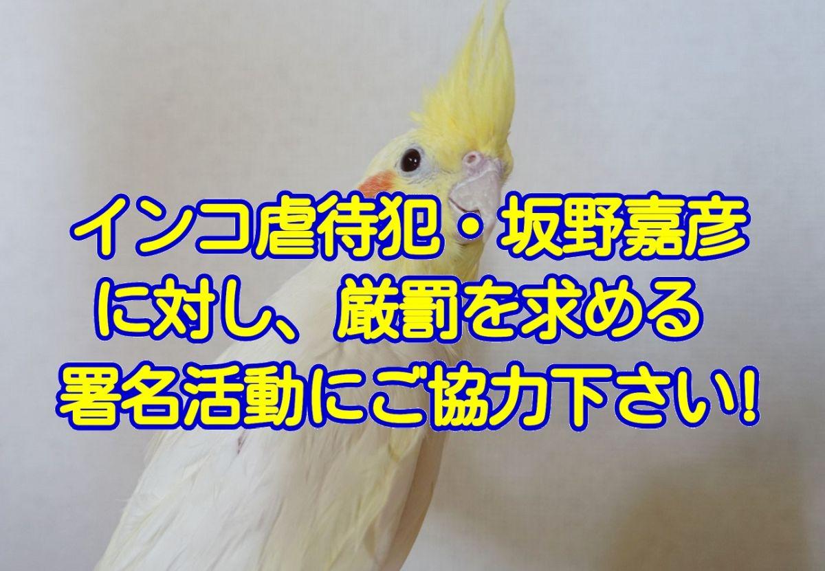 インコ虐待犯・坂野嘉彦に対し、厳罰を求める署名活動にご協力下さい!