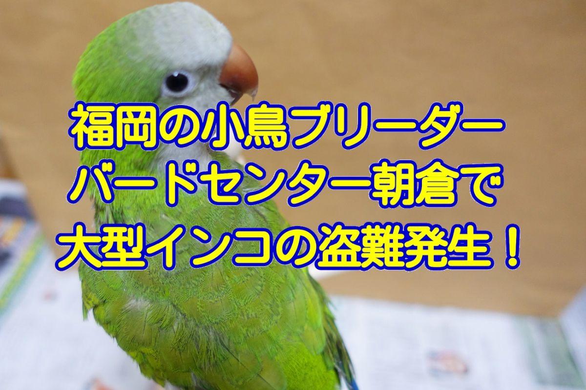 福岡にあるインコ・オウムのブリーダー「バードセンター朝倉」で大型インコの盗難事件が発生!