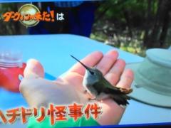 2019年9月15日放送のダーウィンが来た!はハチドリ特集「ハチドリ怪事件 消えた卵とタカの正体」