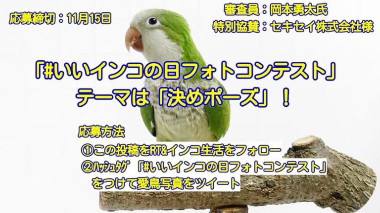 令和初の愛鳥フォトコンテスト「#いいインコの日フォトコンテスト」は、テーマ「決めポーズ」で開催!