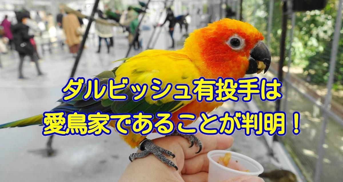 メジャーリーガーのダルビッシュ有投手は、愛鳥家であることが判明!コガネメキシコインコ含む3羽を飼育
