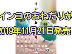 【鳥本】インコのおねだりが2019年11月21日に発売!インコのおねだりの秘密に迫る一冊