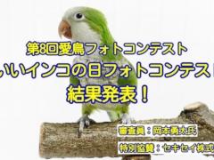 第8回愛鳥フォトコンテスト「#いいインコの日フォトコンテスト」結果発表!受賞作品を紹介