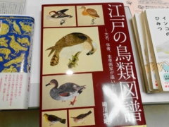 細川博昭氏の新刊「江戸の鳥類図譜」が2020年1月31日発売!江戸時代に描かれた鳥の絵をまとめた一冊