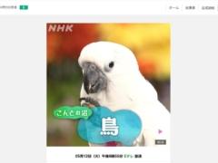 2020年5月9日のNHK教育テレビ「沼にハマって聞いてみた」で小鳥沼が特集!鳥カフェや鳥イベントが紹介