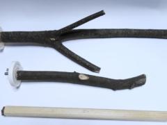 インコの止まり木の選び方と設置場所・本数!オススメの種類や適切な太さを解説