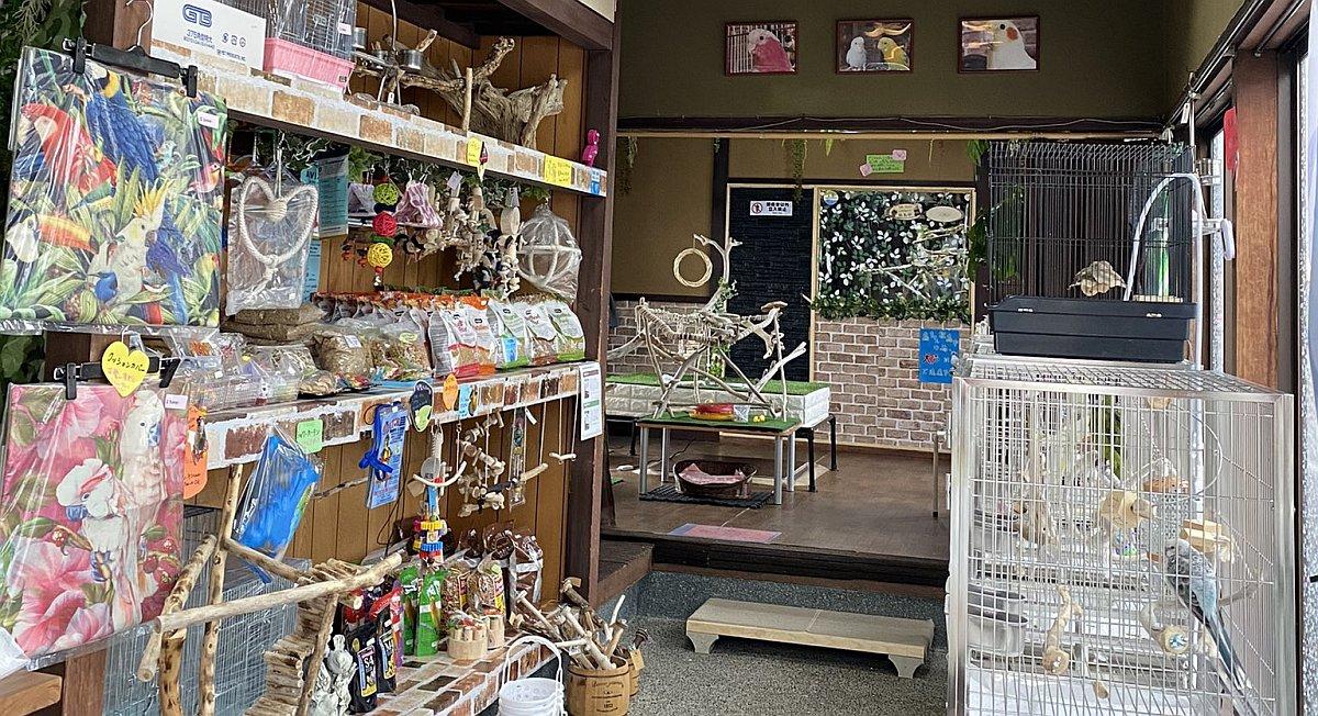 石川県金沢市に2021年1月にオープンしたバードショップBCY-金沢店のお店紹介
