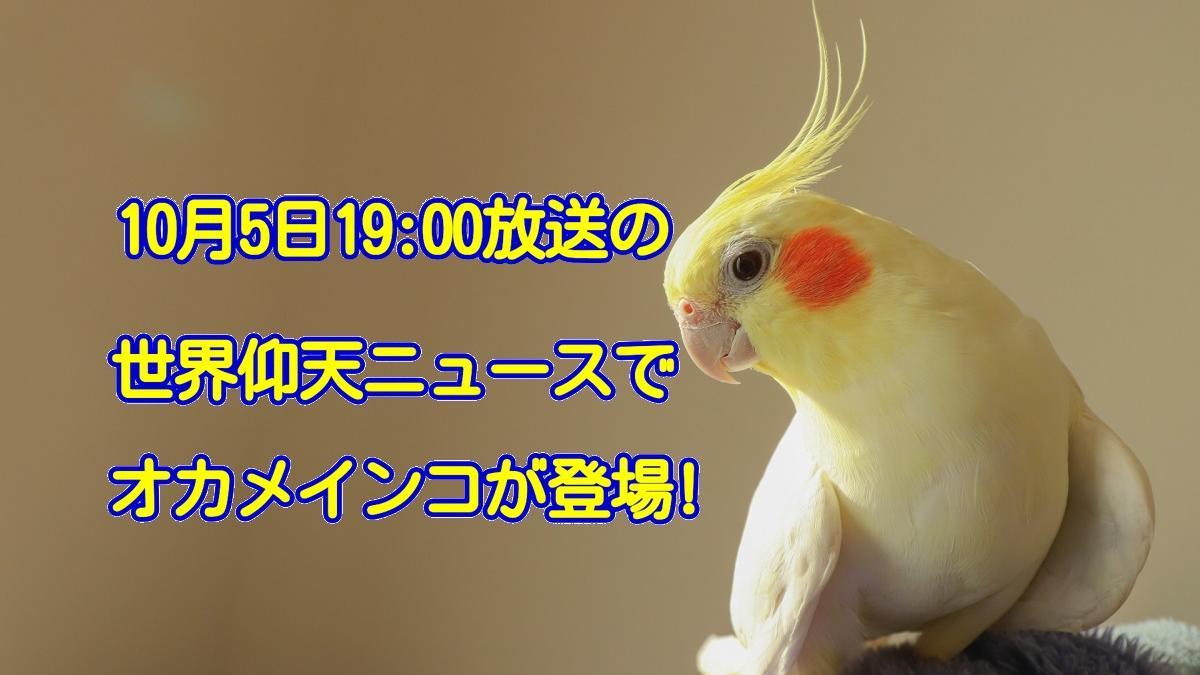 2021年10月5日放送予定の日本テレビ系列「世界仰天ニュース」でオカメインコが登場!